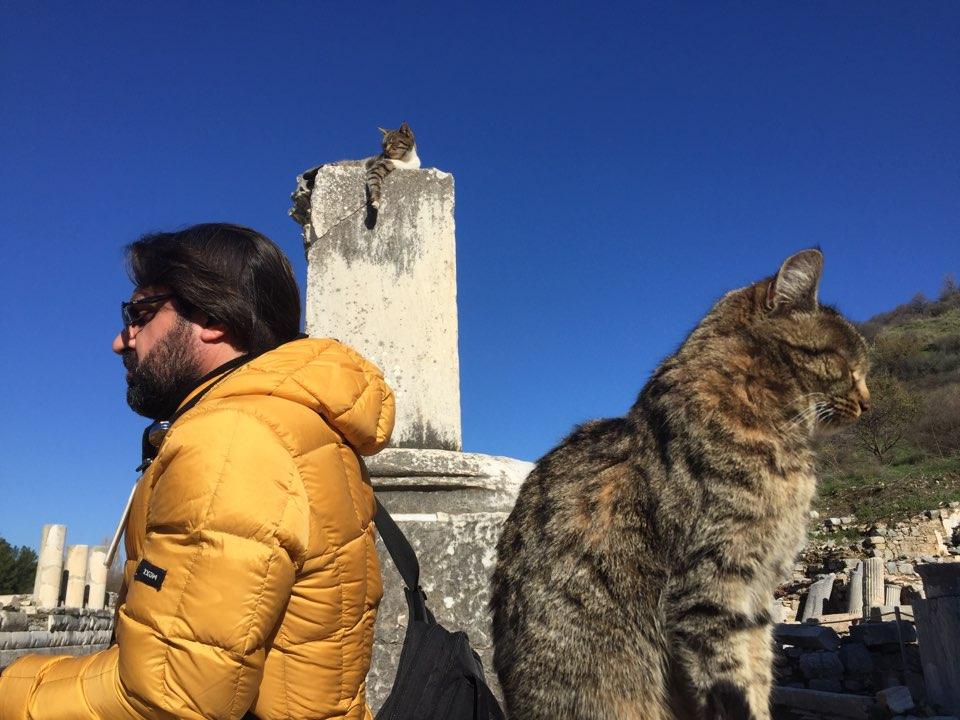 유적지에도 흔한 길고양이는 사람이 아무렇지 않다.jpg