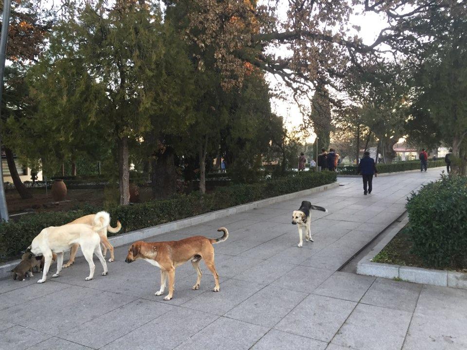 공원에 사람만큼 이나 많은 개들이 모여있다.jpg